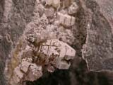 Weloganite, Calcite, Quartz, Marcasite, etc.Francon Quarry, Montreal, Quebec,  Weloganite, Etc.