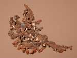 CopperCopper (Native), Various Localities