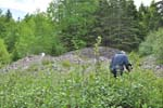 Recent Activities -Antimony Mine, West  Gore, Hants Co., Nova Scotia