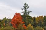 Recent Activities, Fall Colours !