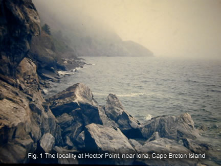 Fig. 1 The locality at Hector Point, near Iona, Cape Breton Island