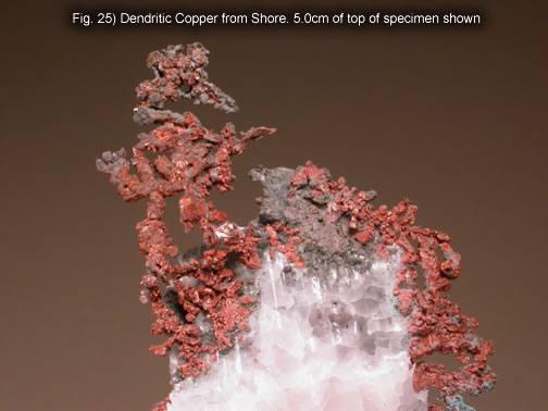 Fig. 25) Dendritic Copper from Shore. 5.0cm of top of specimen shown