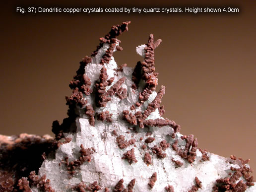 Fig. 37) Dendritic copper crystals coated by tiny quartz crystals. Height shown 4.0cm