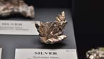 Silver, Wolverine Mine, 3.0cm acrossRecent Activities -Keweenaw Week, Page Two